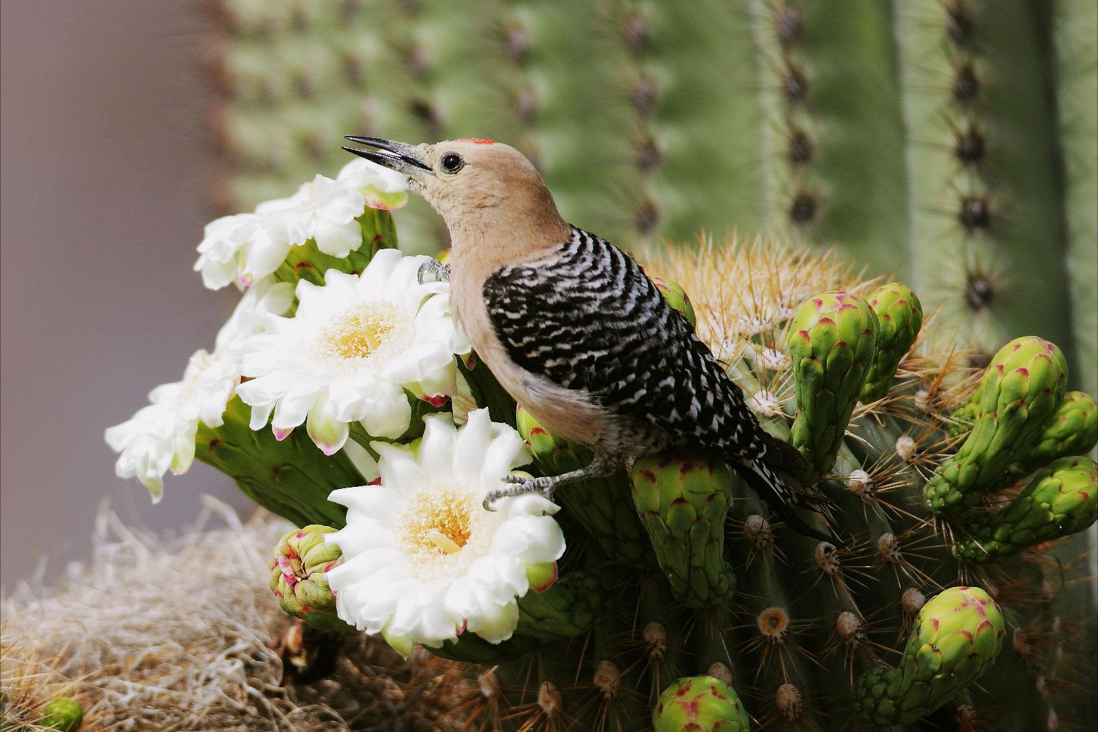 Photographs, Flower and Fine art print on Pinterest