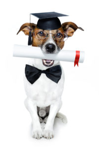 graduated dog with diploma